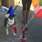 POKAŽITE HUMANOST: U subotu dovedite psa na žurku i donesite POKLON za napuštene!