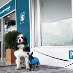 """PARKIRAJTE PSA: Širom Srbije možete """"parkirati"""" psa, ukoliko idete u ovu banku!"""