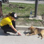 SRBIJA: Za godinu dana spasili više 200 životinja iz nevolje i to POTPUNO BESPLATNO!