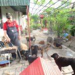 SRBOBRAN: Vukosavljevići od svoje kuće napravili azil za životinje, komšije negoduju!