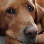 UH: Suze napuštenog starog psa okruženog ravnodušnima!