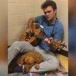 VETERINAR ROS JE CAR: Svira gitaru psu pred operaciju, kako bi ga opustio!