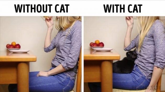 život sa mačkom petface