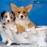 BIOGANCE vam pomaže da okupate štene