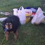 """Tesa je ostavljena sa porukom na vratu: """"Ne treba mi pas""""!"""
