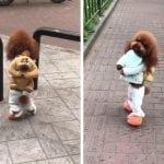 Gledali smo video na kome pas ide na dve noge i – NIŠTA NAM NIJE SMEŠNO!