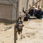 MILION PREGLEDA: Deca na leđima nose životinje iz katastrofalnih poplava!