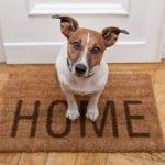 NA CRNOJ LISTI STANODAVACA: Vlasnicima sa psima niko ne želi da izda stan u Srbiji!