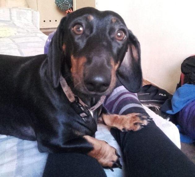 vlasnički pas petface
