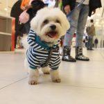 ZA ONE BEZ DOMA: U subotu sa psom na žurku i donesite POKLON za napuštene pse!