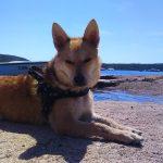 Kampanja UDOMLJAVANJE JE FORA: Na more ili u planine sa psom – zabavnije je!