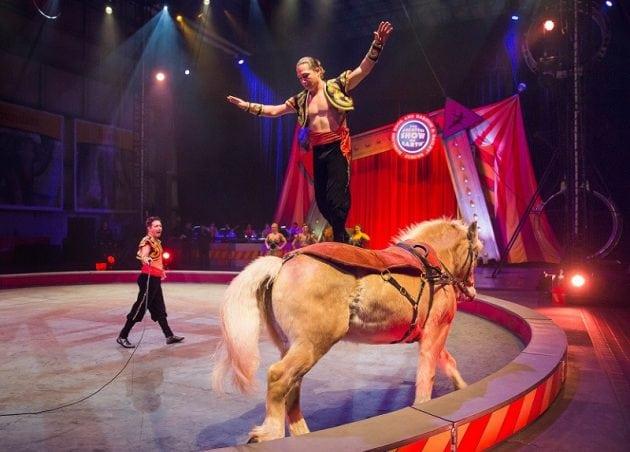 """Nakon 146 godina se zatvara """"najveći šou na Zemlji"""": Životinje iz cirkusa na slobodi!"""