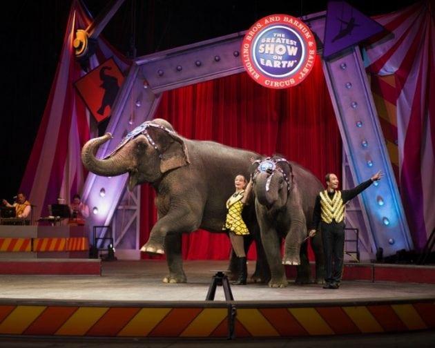cirkusa petface
