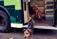 dog friendly vozila petface
