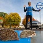 """BRAVO: Pobednička IDEJA za pomoć ježićima – """"Pazi, ježevi""""!"""