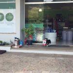 PRESLATKO: Ovaj pas svaki dan ide sam u kupovinu