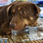 Kako da vam ljubimci budu sigurni tokom letnjih vrućina