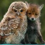 Nesvakidašnja PRIJATELJSTVA u životinjskom svetu