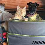 Nepokretni pas Skarlet i slepi mačor Mogli NAJBOLJI DRUGARI