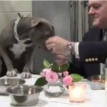 KAKAV CAR: Veterinar organizovao večeru za psa u Prihvatilištu! (VIDEO)