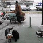 PRIČA KOJA SLAMA SRCE: Čika Mirko je živeo SAM sa 5 pasa i 2 mace i danas je PREMINUO!