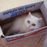 UPOZNAJTE TIHONA: Poseban mačak sa čudnim očima!
