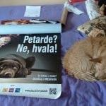 DA LI PODRŽAVATE: Predlog da se uvede zabrana bacanja petardi na životinje!