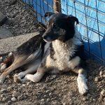 PRODUŽI ŽIVOT: Akcija prikupljanja hrane za napuštene životinje