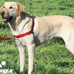 Kako da utvrdite koji je NAJBOLJI AM za vašeg psa?
