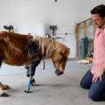 Životinje dobile drugu šansu za život uz pomoć PROTEZA
