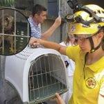 HUMANO: Spasavanje mlade ptice sa krova Opštine Stari grad!