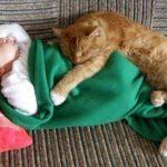 Ovih 5 rasa mačaka su NAJVEĆE MEZIMICE u mačjem svetu!