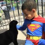 ŠON JE SUPERHEROJ: Petogodišnji dečak brine o napuštenim mačkama!