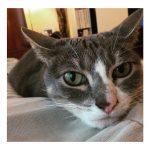 Potraga za nestalom mačkom BABOU: Druželjubivi, mali đavo!