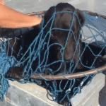 BEOČIN: Privatna firma hvatala napuštene pse – osvanuo snimak!