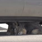 Keruša lutala ulicama napuštena i krila se ispod kola dok ne naiđe pomoć!
