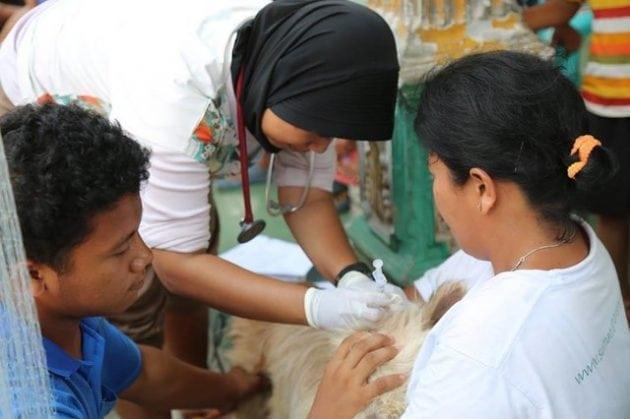 indoneziji petface