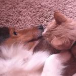 Keruša Kloi ne mari za odrasle mačke, ali zato mačiće obožava!