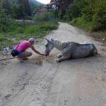 LESKOVAC: Izgladneli i mršavi konji ostavljeni na putu da uginu!