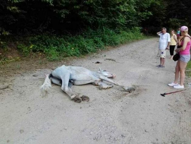 mršavi konji petface