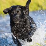 Istraživanja pokazuju da psi znaju kada je čovek NEPOUZDAN!