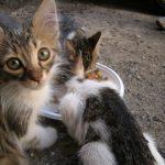 VIŠE NEMA IZGOVORA: Besplatna sterilizacija pasa i mačaka u Zrenjaninu!