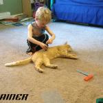 Dečak čini najslađu stvar kako bi njegov mačak znao da ima dom za stalno