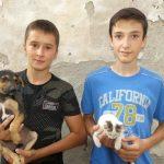 PRIMER SVIMA: Nemanja (14) i Bogdan (15) napravili svoj azil za pse i mačke!