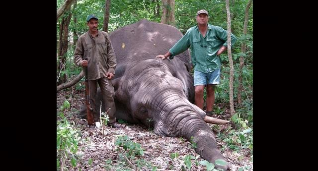 ubio slon petface