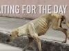 uličnog psa petface