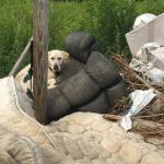 Porodica pasa spasena iz užasa u dvorištu napuštene kuće