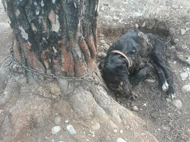 za drvo petface