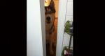 Četiri razloga zbog kojih vas vaši psi prate čak i u WC!