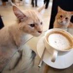 "MI IDEEEEMO: PRVI ""Cat café"" u našem komšiluku!"